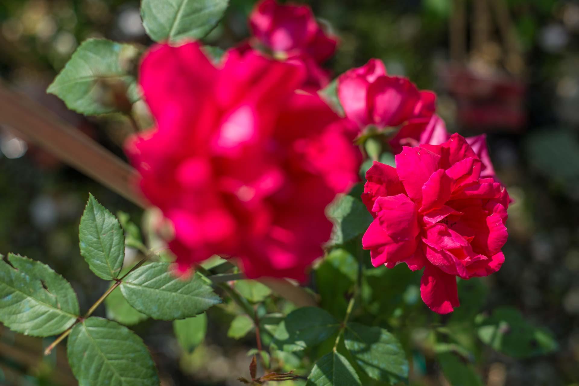 https://www.salmasogarden.it/wp-content/uploads/2020/11/foto-dettaglio-giardino-con-aiuola-3.jpg