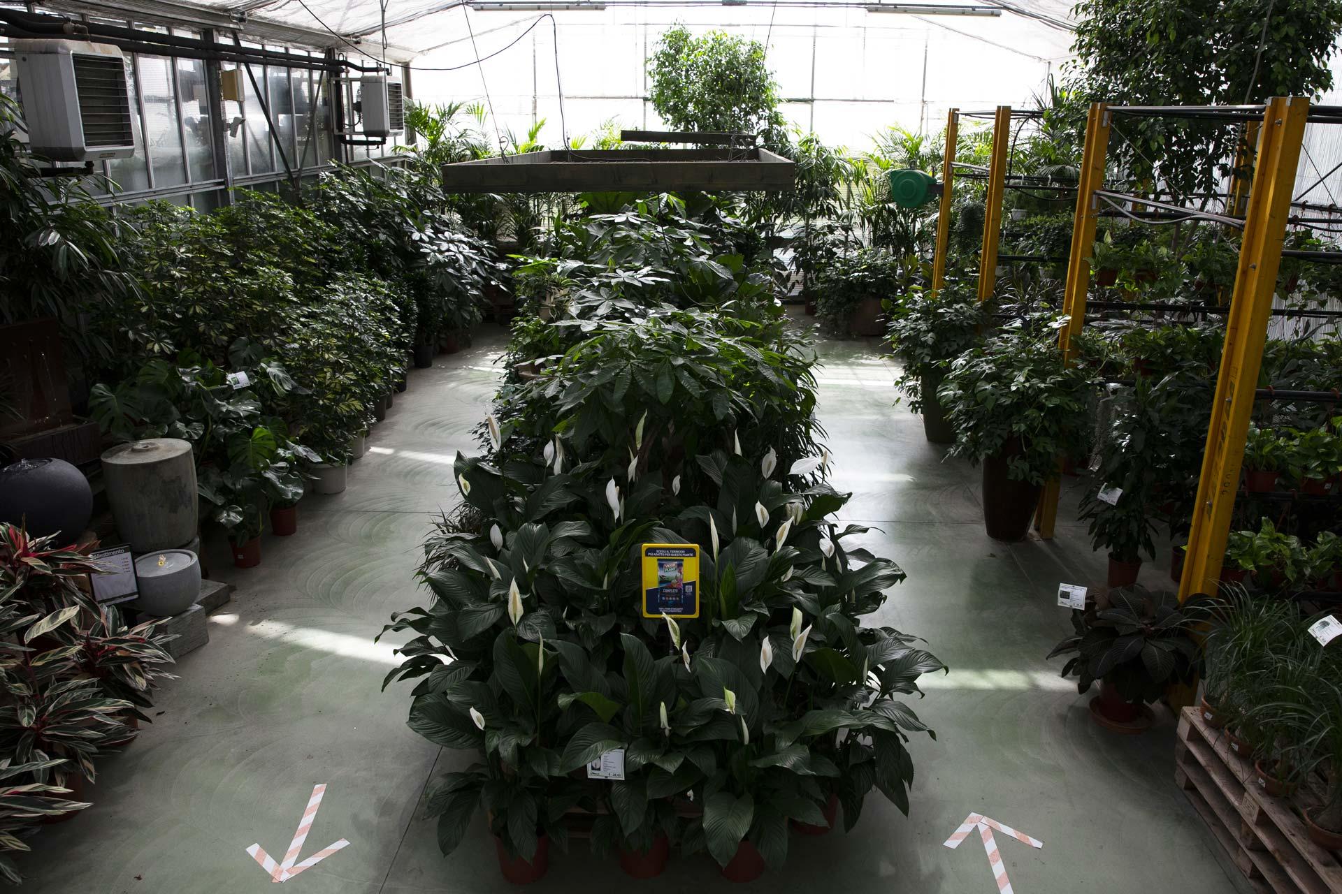 https://www.salmasogarden.it/wp-content/uploads/2020/11/reparti-salmaso-garden-piante.jpg