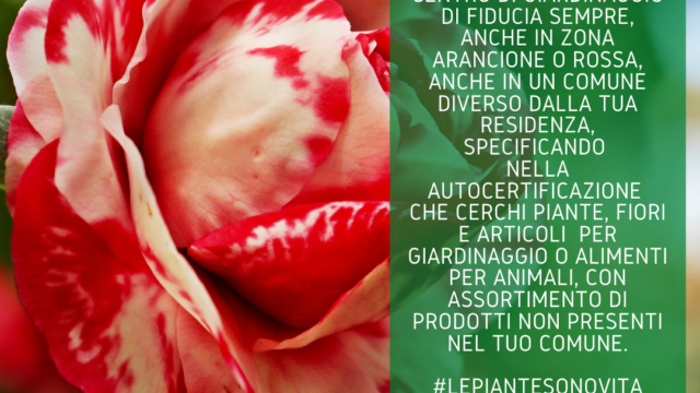 https://www.salmasogarden.it/wp-content/uploads/2021/03/Centri_Giardinaggio_Spazi_Aperti_2-640x360.png
