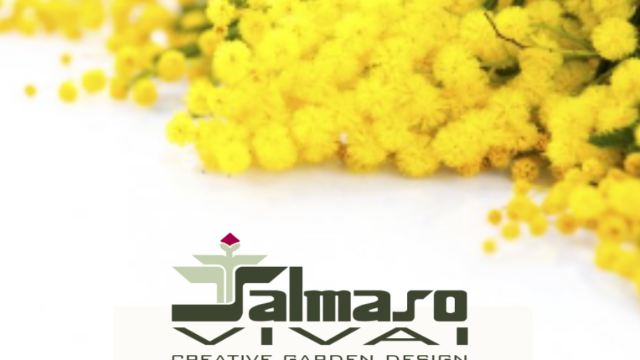 https://www.salmasogarden.it/wp-content/uploads/2021/03/Copertina-Mimosa-640x360.png